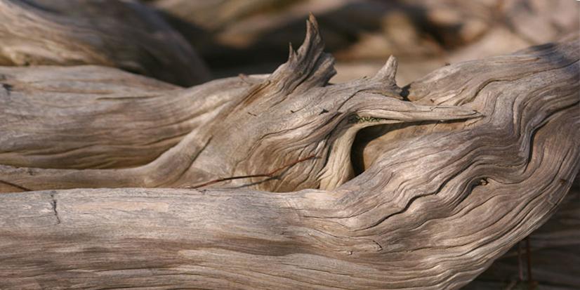 driftwood details
